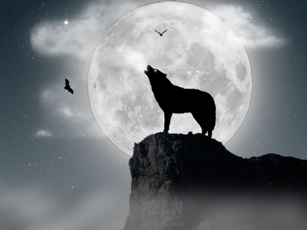 Comment etre un loup garou ?